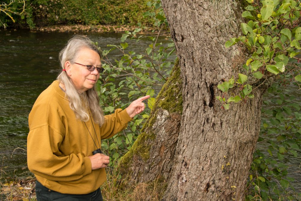 Volunteer inspecting a tree