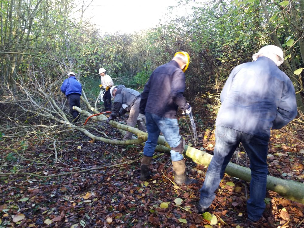 Volunteers sawing a tree
