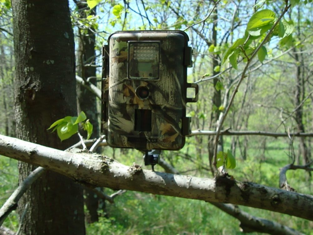 Trail camera set up in the woods