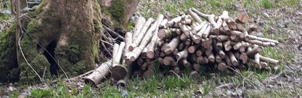 Pile of coppiced wood at Butcher's Wood