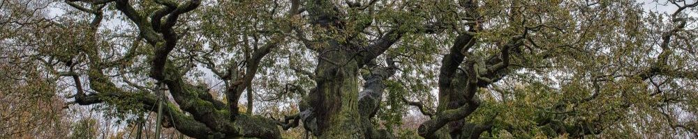 Major Oak, Phil Lockwood WTML