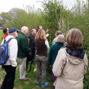 Woodland Trust Manager showing volunteers how to identify trees
