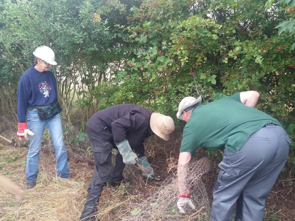 Volunteers digging out chicken wire