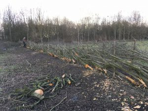 hedge laying to date