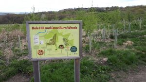 Dene Burn Wood