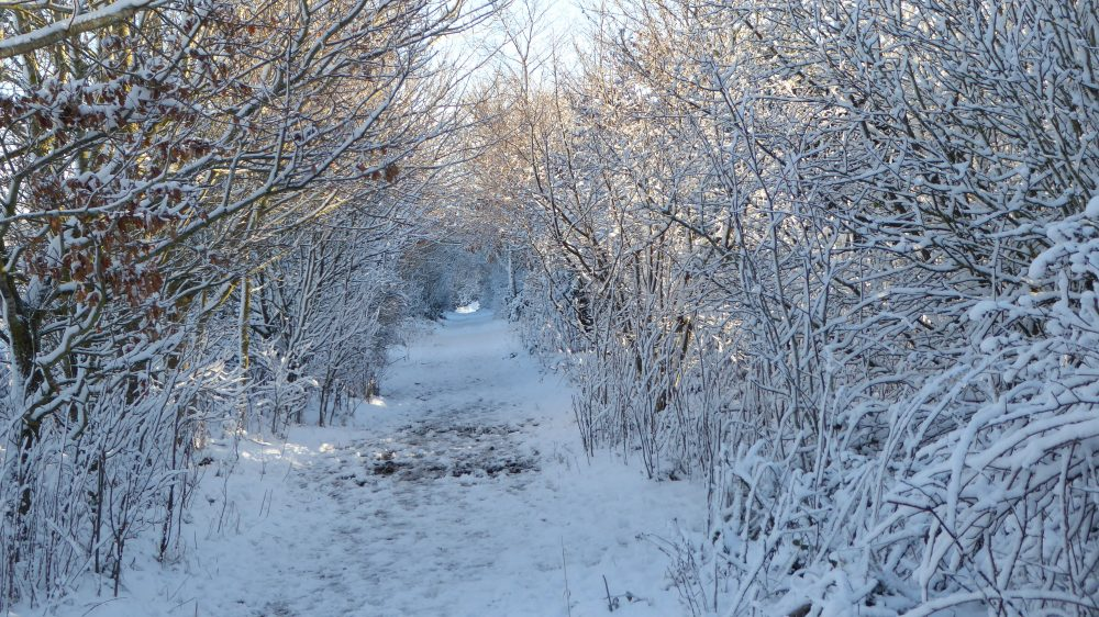 Northern footpath in snow.