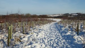 Bale Hill footpath in the snow.